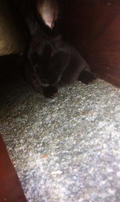 My Bunny Rocky