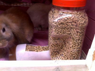 Homemade Gravity Rabbit Feeders Waterers