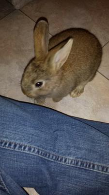 Rabbit Identification