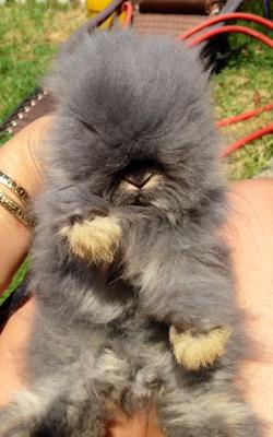 The first time I held my new bunny buddy