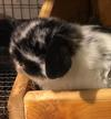 New Holland lop with no name yet!