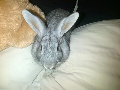 My growling rabbit