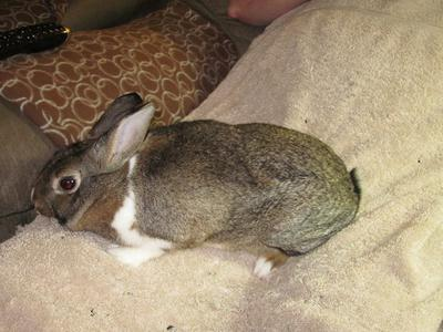 Female - labelled Mini Rex mix by shelter