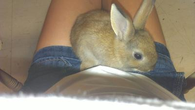 what can you tell me about my young rabbit?