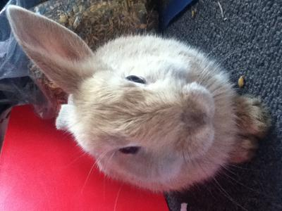 My fluffy bunny will miss us