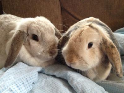 Holly and Maisy